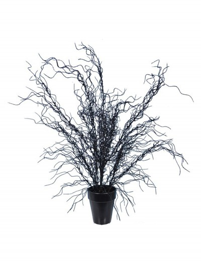 20'' Black Weeping Tree