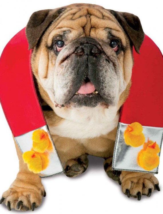 Chick Magnet Pet Costume